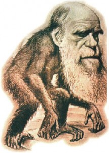 Darwincaco