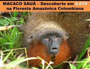 Macaco Sauá