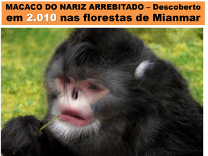 Macaco do nariz arrebitado