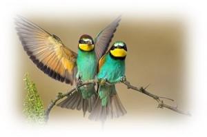 Pássaros 2