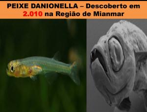 Peixe Danionella