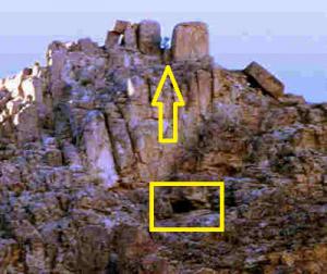 25-Árvore-Sinai-MTSINA10